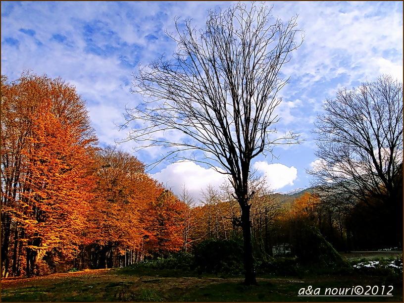 glory of Autumn-36