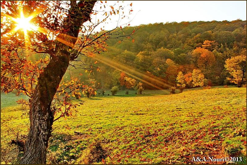 glory of Autumn-38