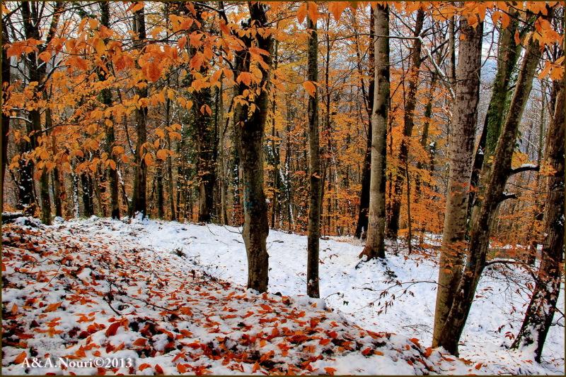 grandeur of two seasons