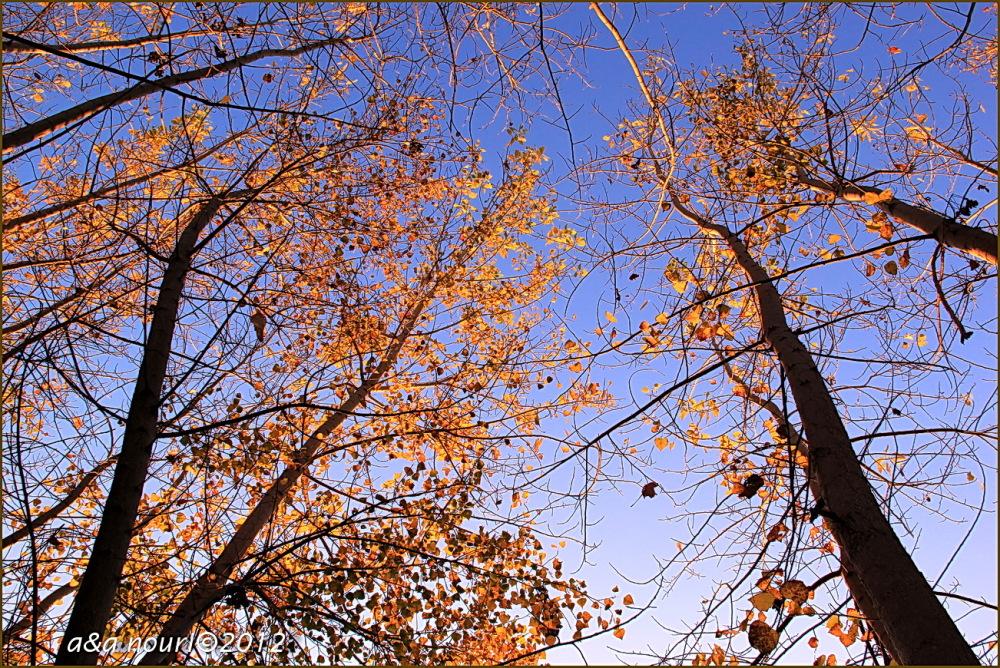 glory of Autumn-43