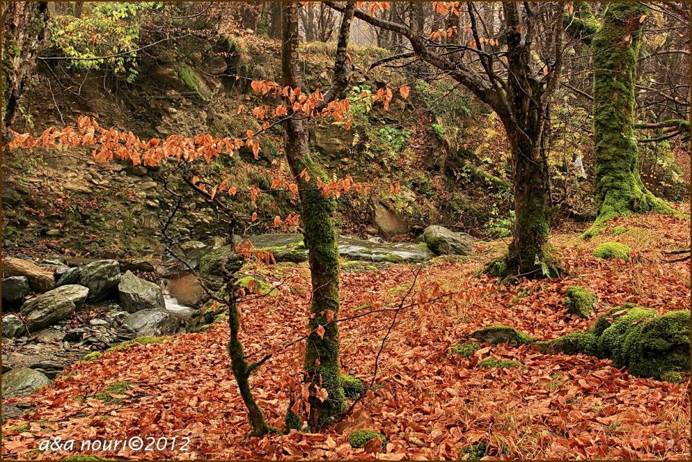 glory of Autumn-49