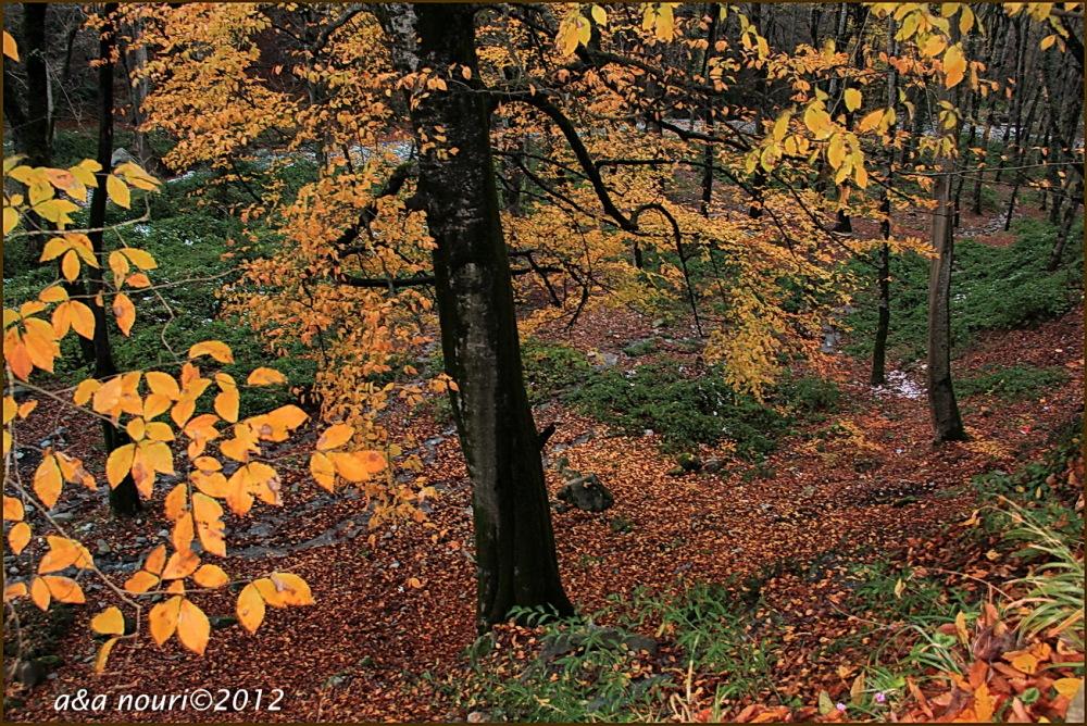 glory of Autumn-50