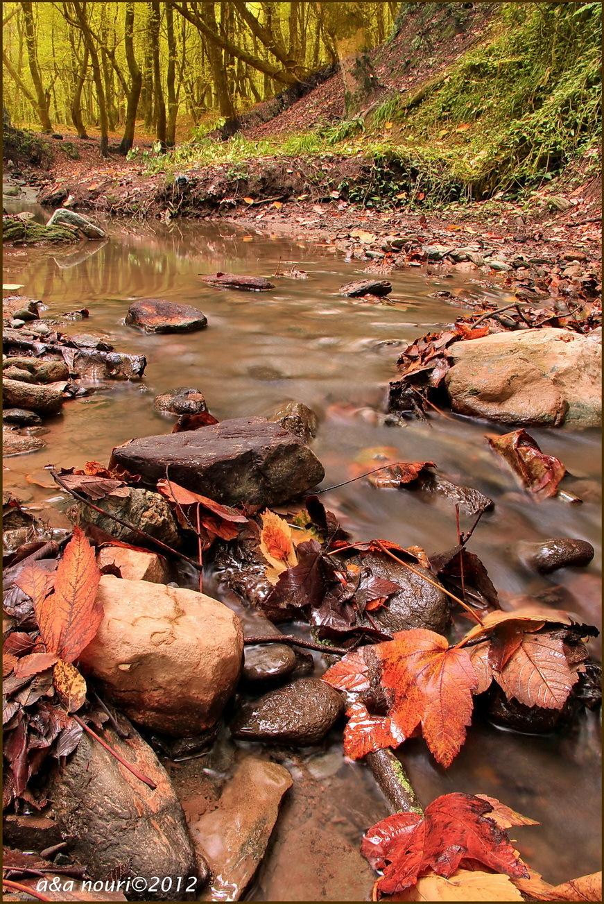 glory of Autumn-51