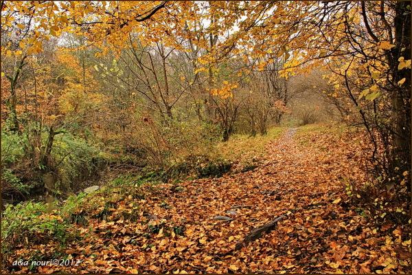 glory of Autumn-53