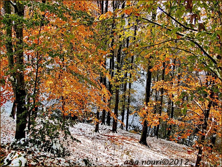 glory of Autumn-56