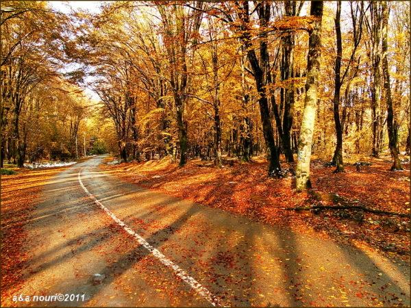 glory of Autumn-63