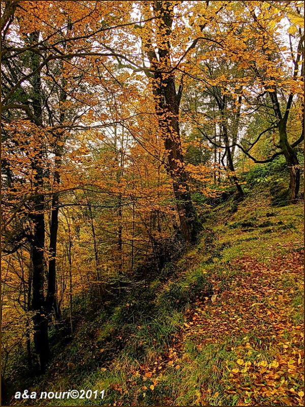 glory of Autumn-68
