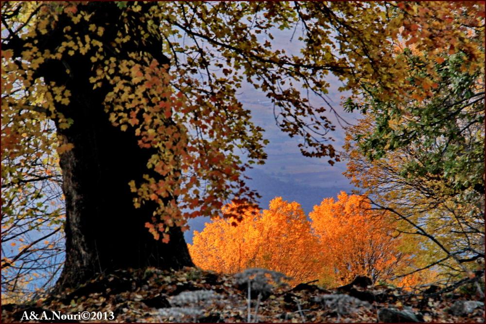 glory of Autumn-66