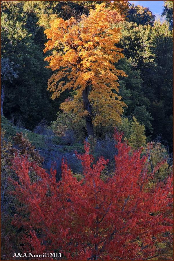 glory of Autumn-70