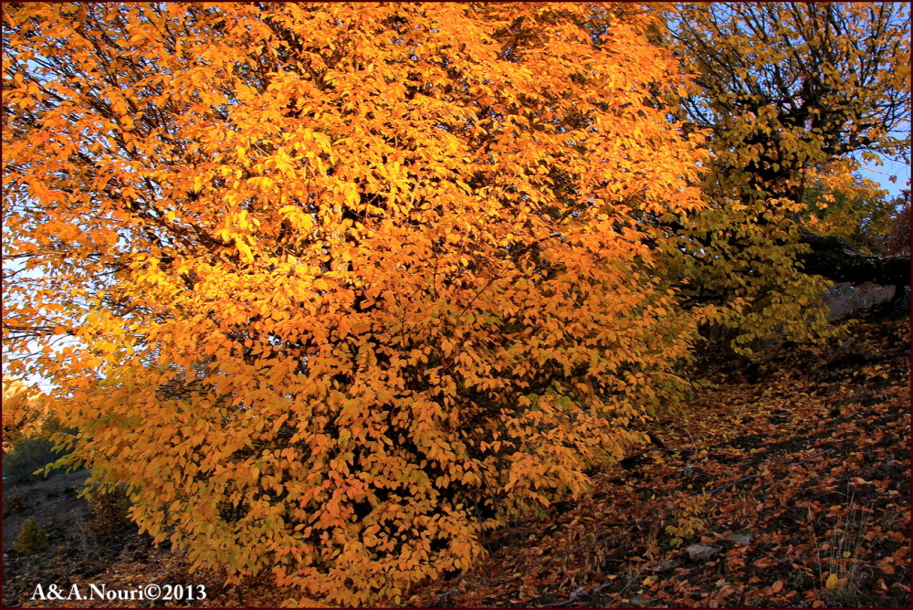 glory of Autumn-72