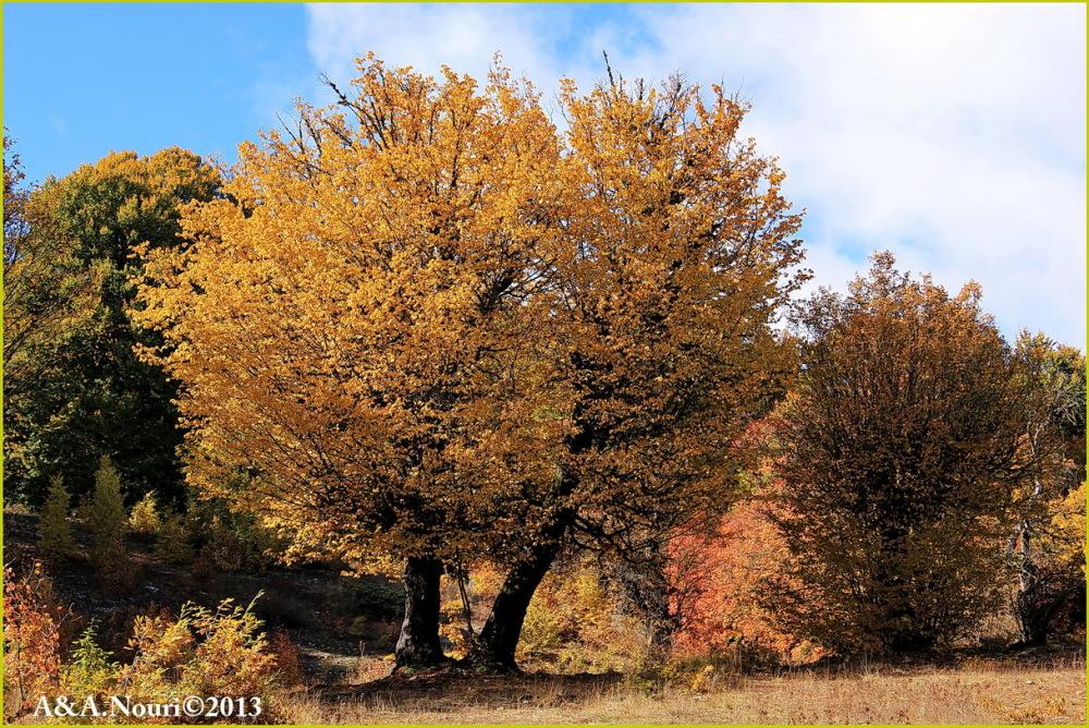 glory of Autumn-74