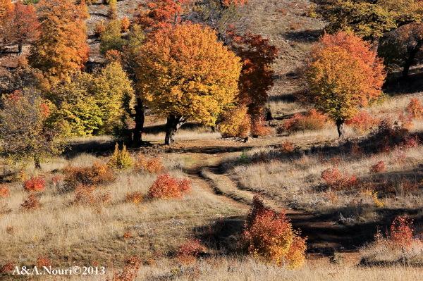 glory of Autumn-75