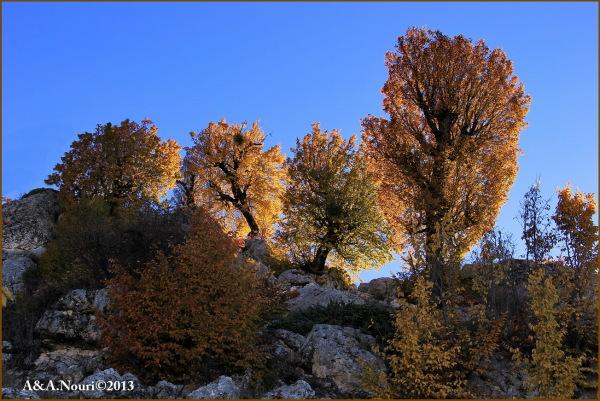 glory of Autumn-78