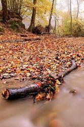 glory of Autumn-88