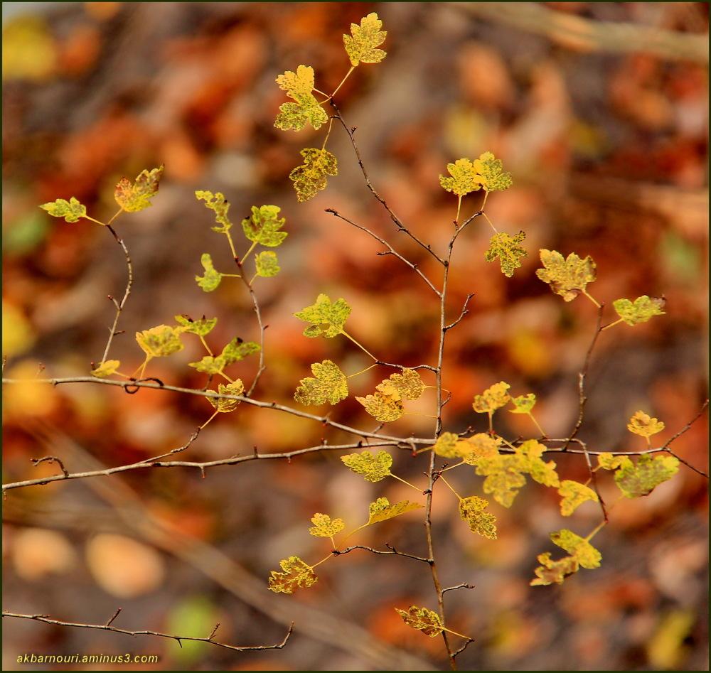 glory of Autumn-89