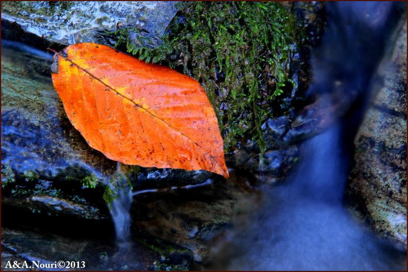 glory of Autumn-90
