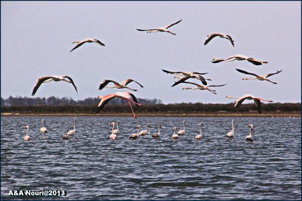 flamingos community