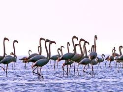 Flamingos Senate