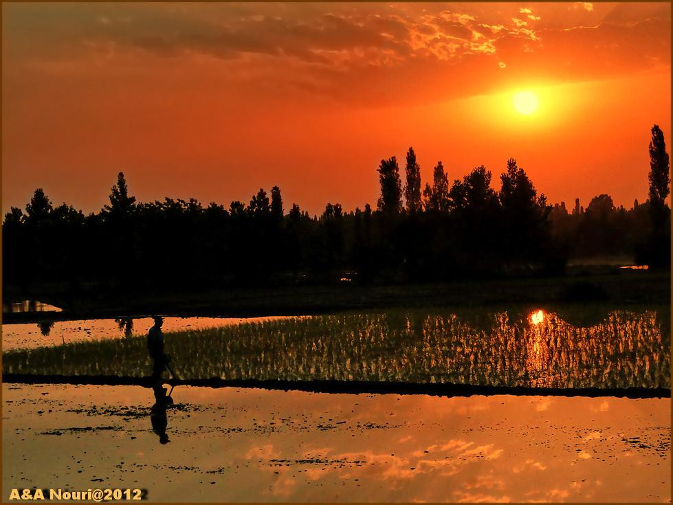 work for sunset