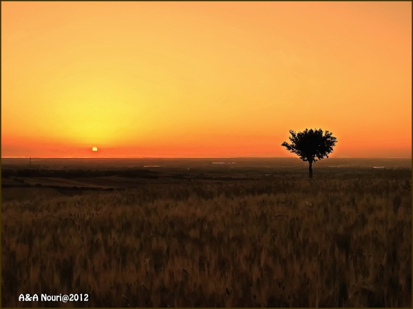 lonely tree and lonely sun