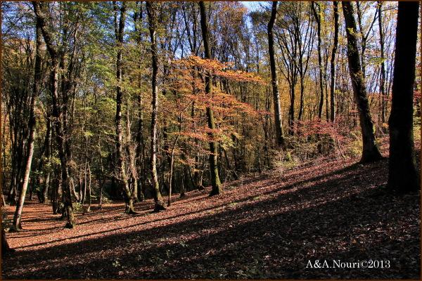 glory of Autumn-99