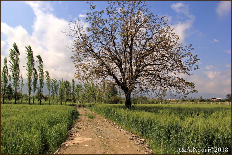 path through green