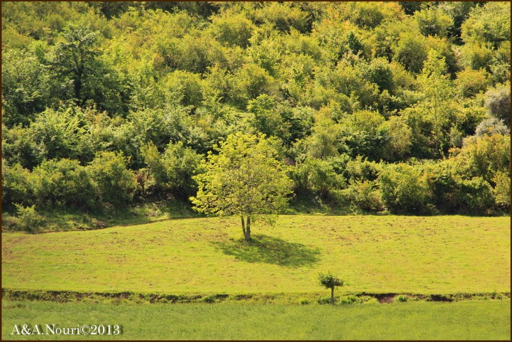 greens of spring