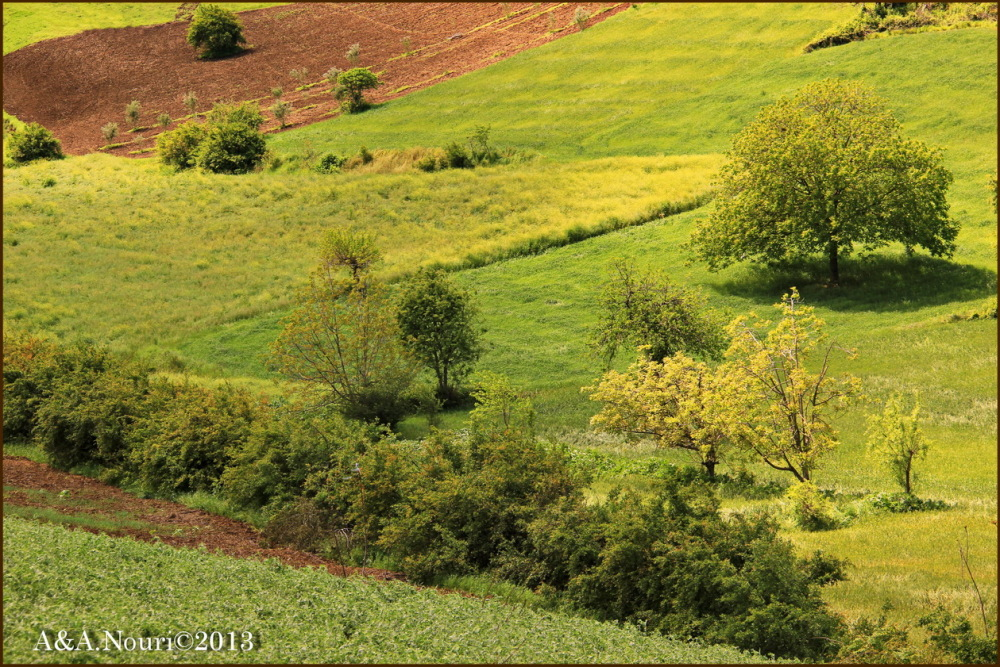 yellow green spring