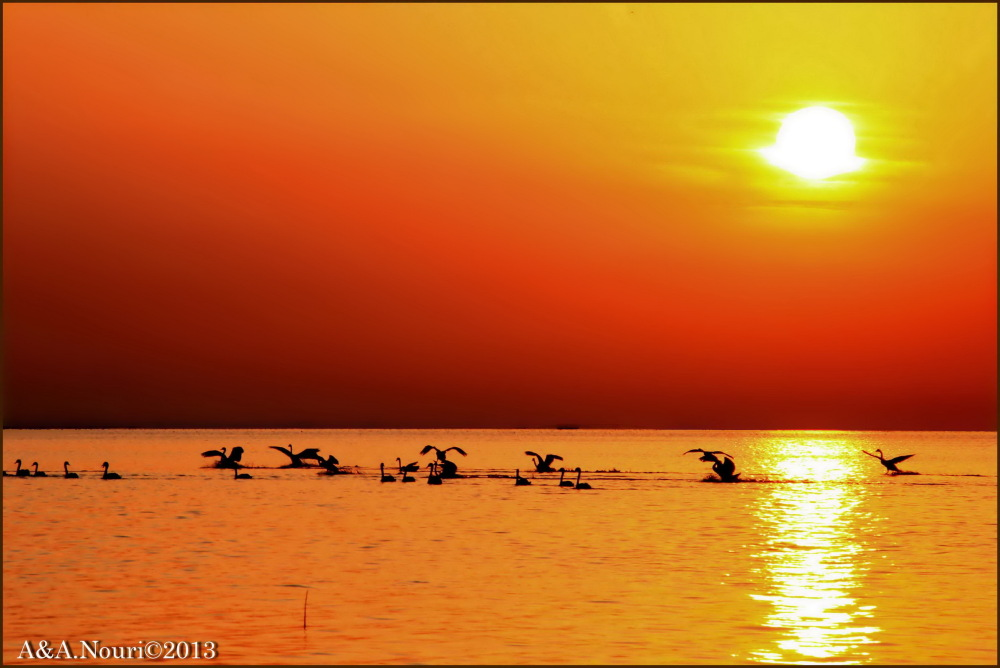 orange sun for swans!