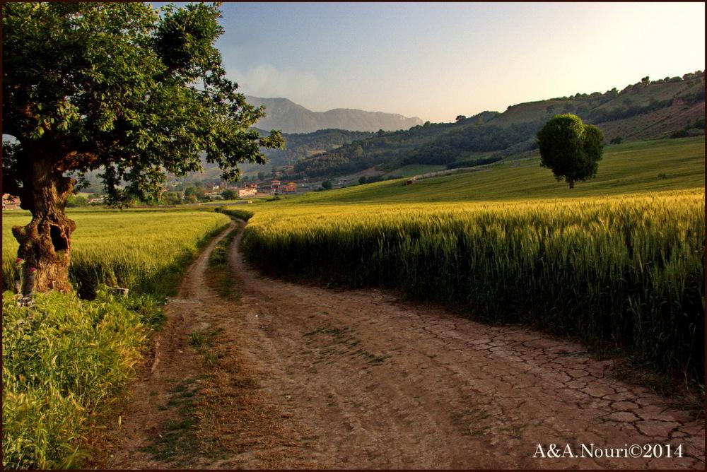 Road in wheatland