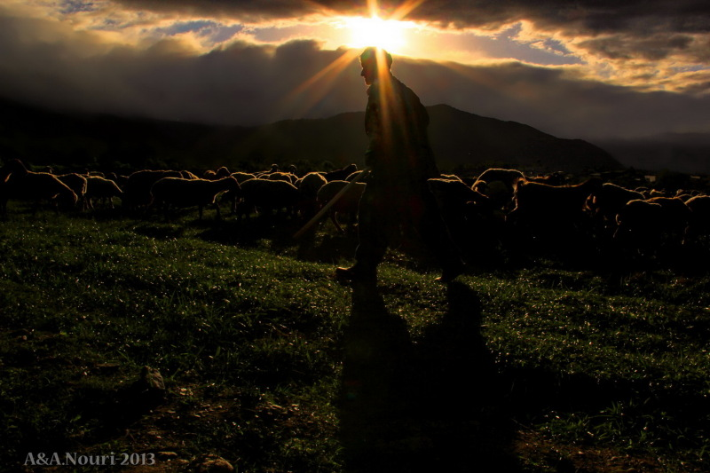 shepherd sun!