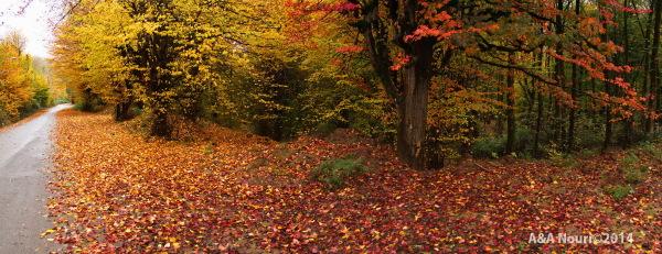 glory of Autumn-176