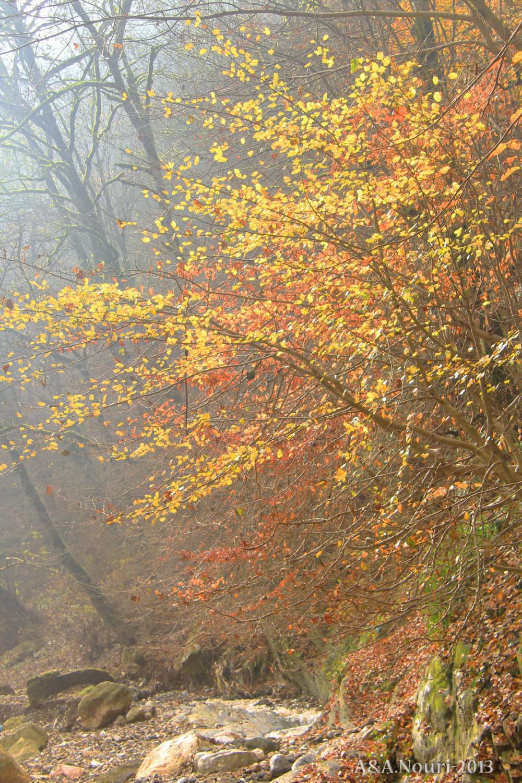 glory of Autumn-91