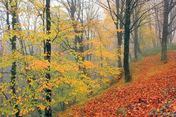 glory of Autumn-92