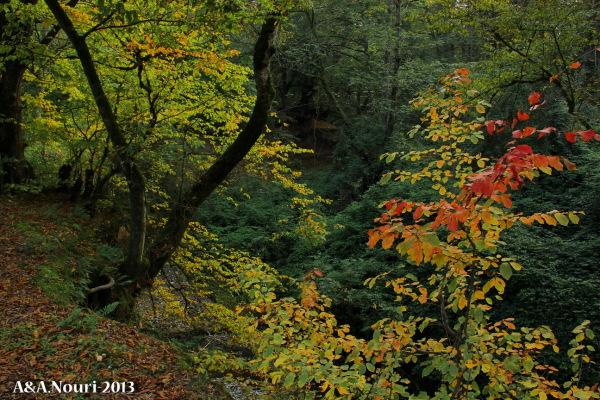 glory of Autumn-94