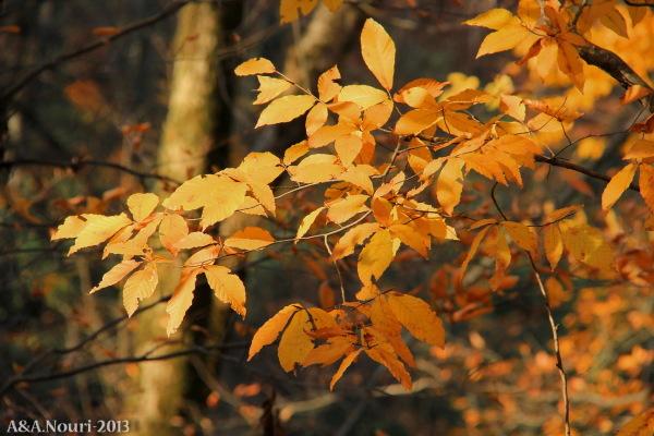 glory of Autumn-101