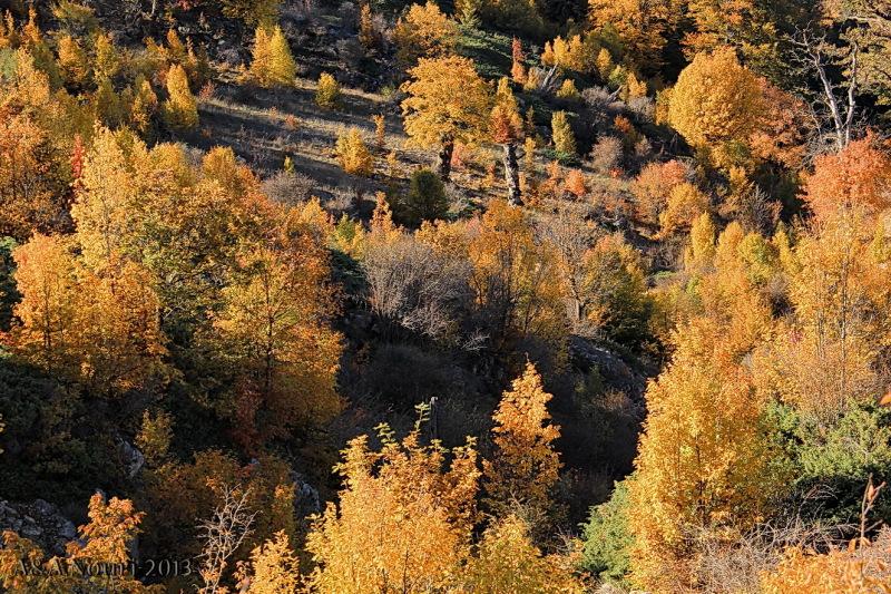 glory of Autumn-108