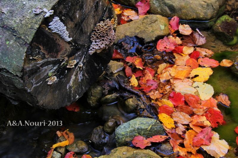 glory of Autumn-149
