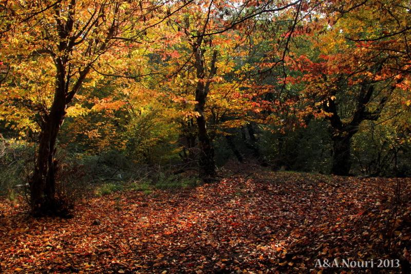 glory of Autumn-114