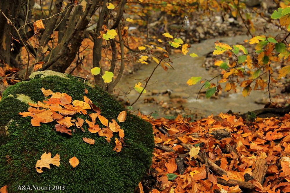glory of Autumn-116