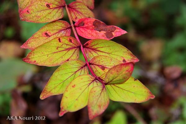 glory of Autumn-124