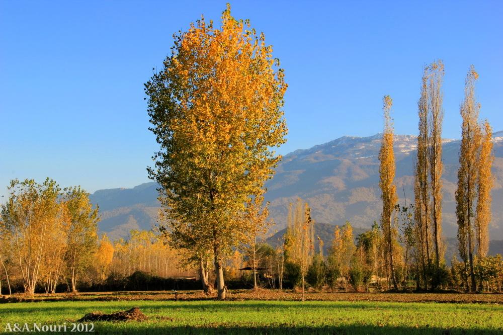glory of Autumn-125