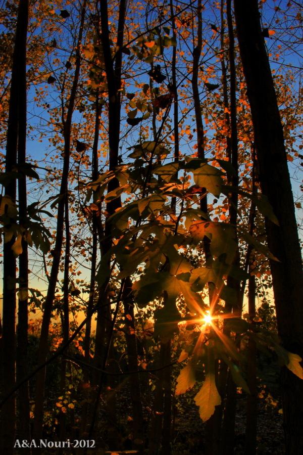 glory of Autumn-126