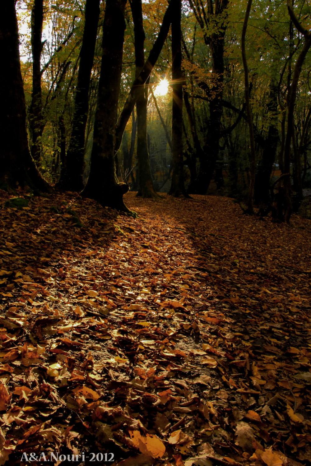 glory of Autumn-136