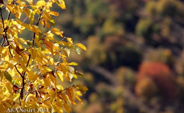 glory of Autumn-140