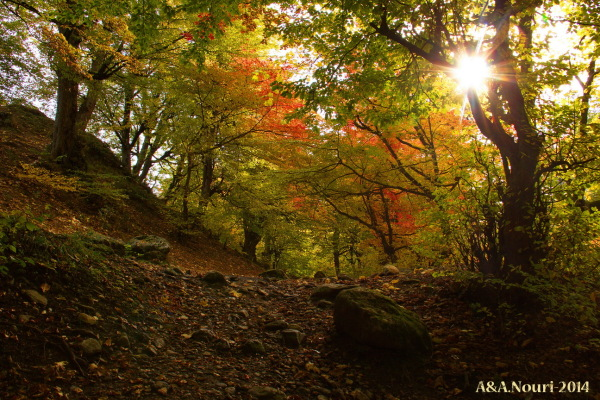 glory of Autumn-184