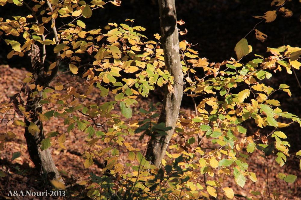 glory of Autumn-144