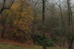 glory of Autumn-153