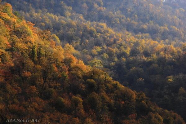 glory of Autumn-154