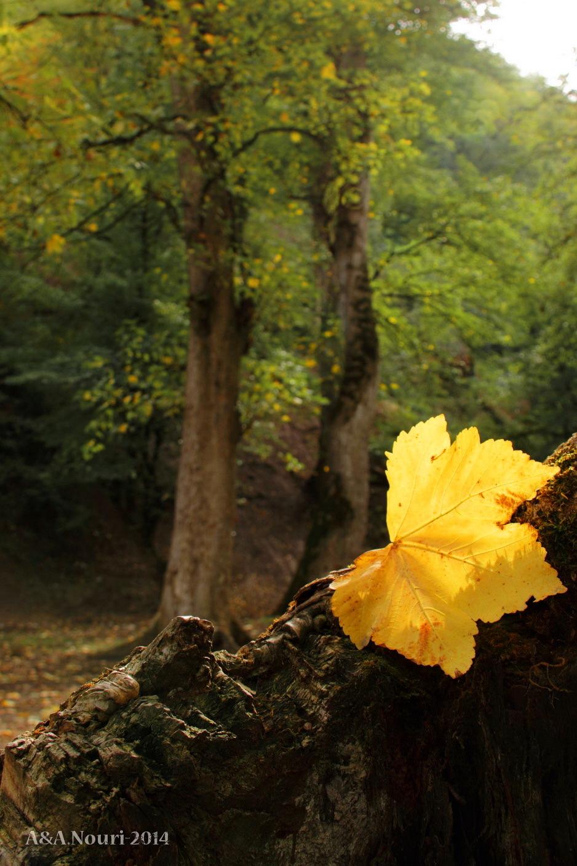 glory of Autumn-157